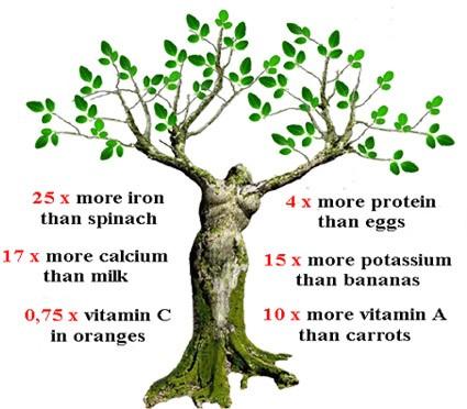 Moringa Skincare Benefits